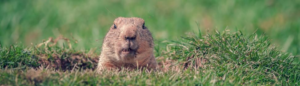 Groundhogs Day - Climate Control Company